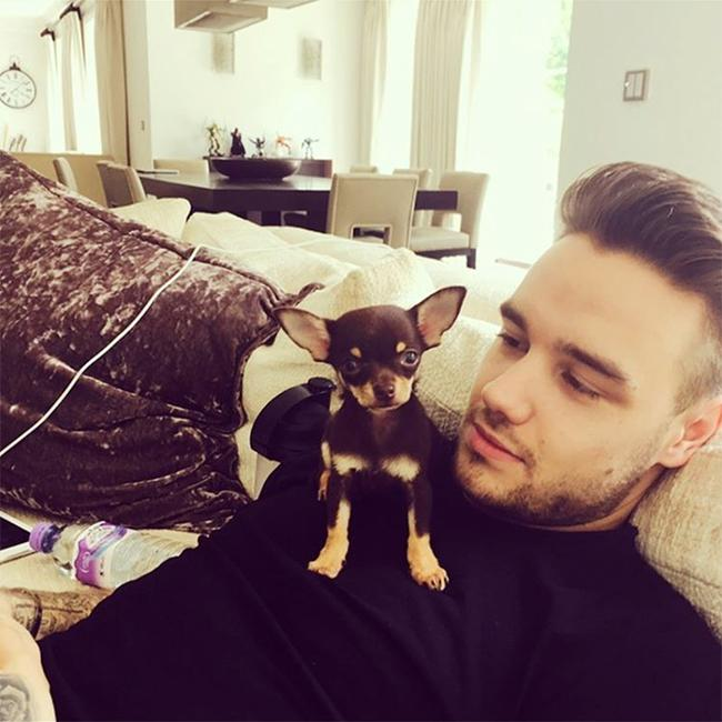 Liam Payne and Cheryl's new pet dog