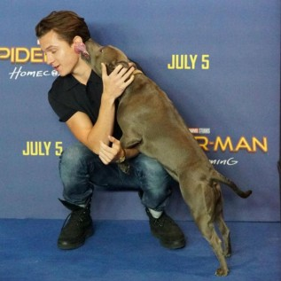 Tom Holland can't go anywhere without his dog