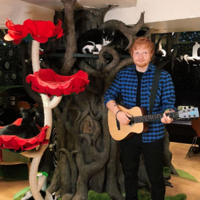 Ed Sheeran's waxwork is on display at a cat cafe in London