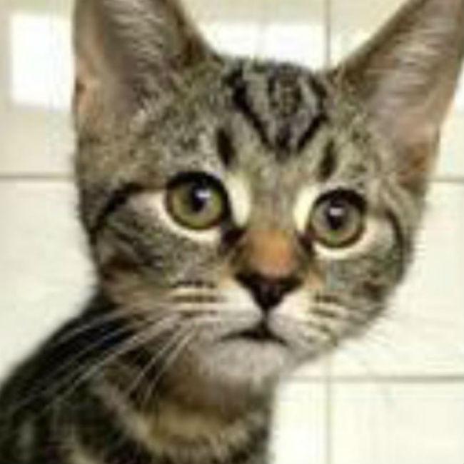 Liam Gallagher's new cat