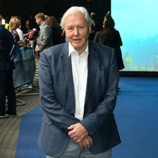 David Attenborough says his popularity is 'odd'