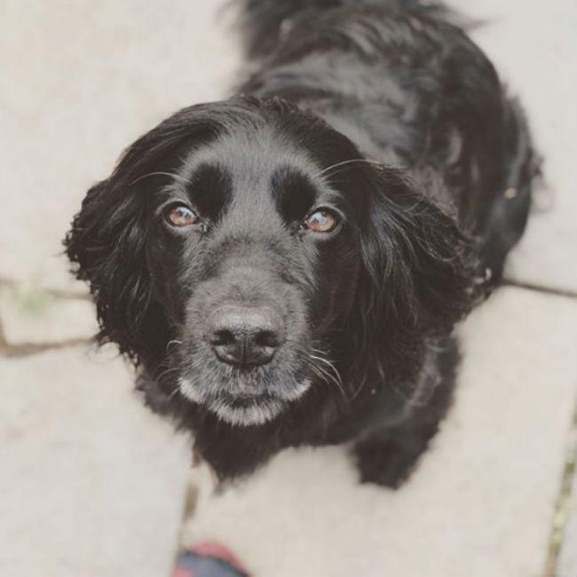 James Middleton thanks dog for helping him through depression