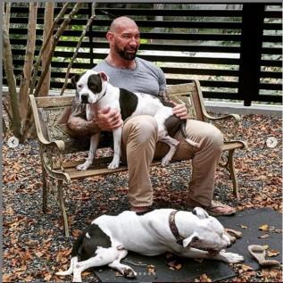 Dave Bautista adopts two abandoned pitbulls