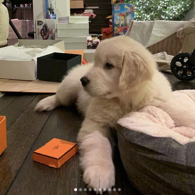 Kourtney Kardashian gets a puppy for Christmas