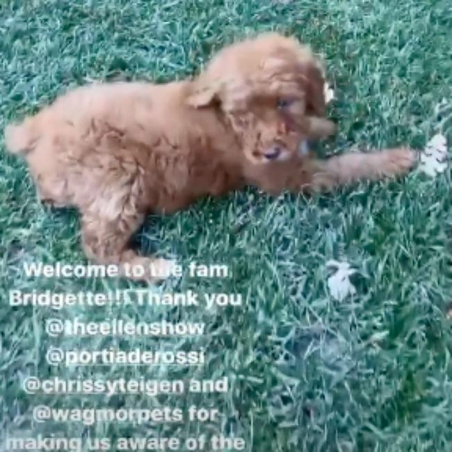 Kris Jenner adopts abandoned pup